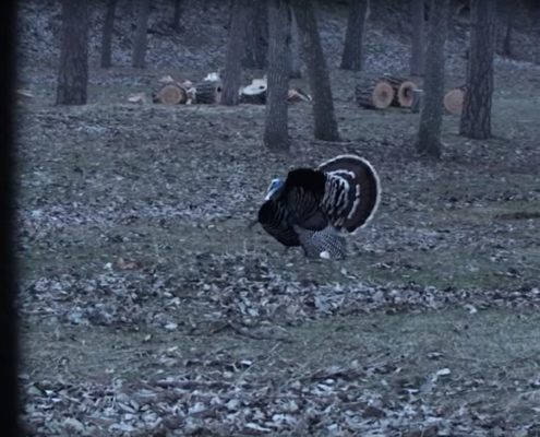 Taking Your Kid Turkey Hunting | Raised Hunting