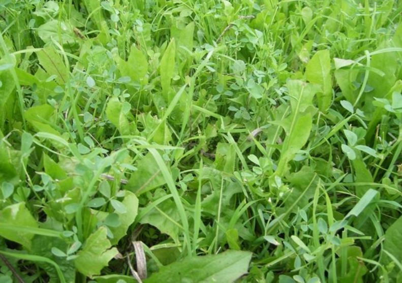 Best Seeds For Food Plots